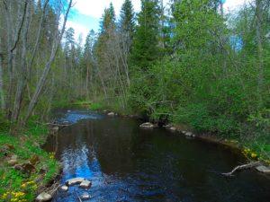 реки Орлинка